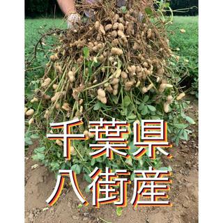 tori 様専用 おおまさり5キロ(野菜)