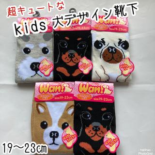kids  綿混 イヌ柄 のびのびソックス5足セット【19〜23㎝】