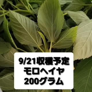 【週末値下げ!】【9/21収穫予定】 モロヘイヤ 200g 自家栽培無農薬(野菜)