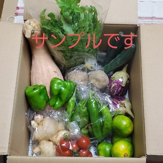 新鮮!お野菜詰め合わせ(おまかせBOX)(野菜)