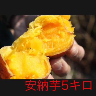 安納芋5キロ(鹿児島県種子島産)即購入ok(野菜)
