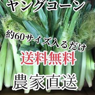 農家直送ヤングコーン約60サイズ入るだけ‼️送料無料(野菜)