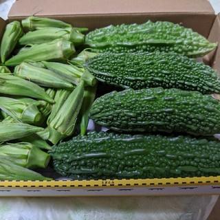 岡山県産  新鮮ゴーヤ4〜10本程度  おくら50個  無農薬栽培(野菜)