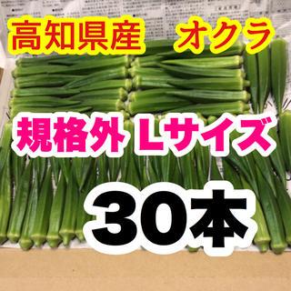高知県産オクラ 規格外 Lサイズ 30本(野菜)