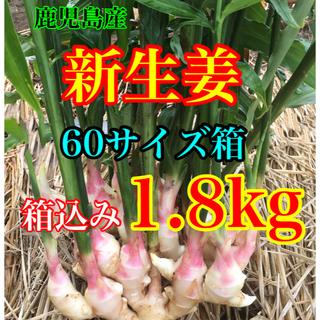 新生姜 鹿児島産 60サイズ箱(野菜)