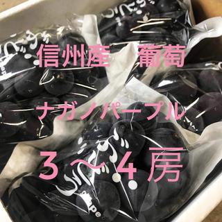 信州産 葡萄 ナガノパープル  3〜4房(フルーツ)