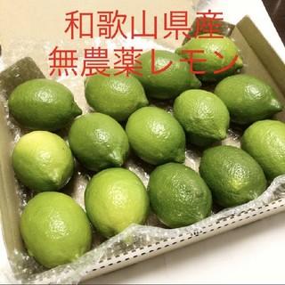 和歌山県産 グリーンレモン