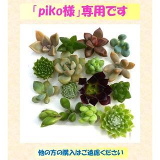 多肉植物 【0412】  多肉植物16種セット(その他)