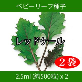 ベビーリーフ種子 B-35 レッドケール 2.5ml 約500粒 x 2袋(野菜)