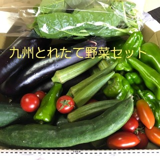 九州とれたて野菜セット コンパクト便
