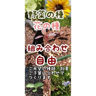 お得種セット(簡単家庭菜園・ガーデニング・プランター栽培に)(その他)