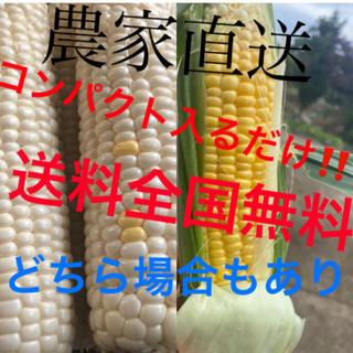 みゅうたんたん様専用(野菜)