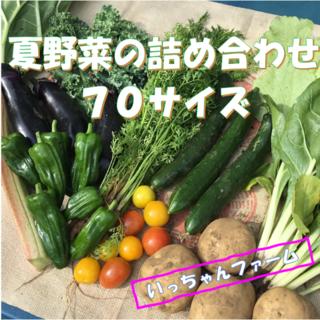 夏~秋野菜の詰め合わせ 70サイズ 【クール便】 9月26~27日発送(野菜)