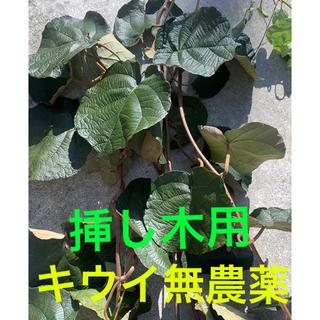 挿し木⭐︎キウイ⭐︎10本⭐︎無農薬(フルーツ)