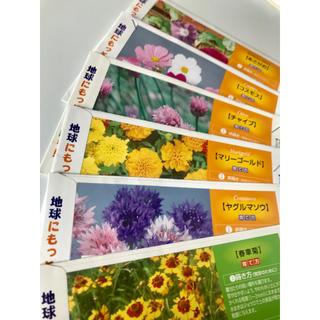 花の種6種  春車菊 ヤグルマソウ マリーゴールド チャイブ コスモスあさがお(その他)