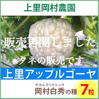 92261【HT7】上里岡村農園 アップルゴーヤ白秀のタネ7粒(野菜)