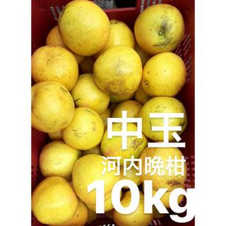 愛媛 宇和ゴールド 10Kg   河内晩柑 嵐ゴールド(フルーツ)