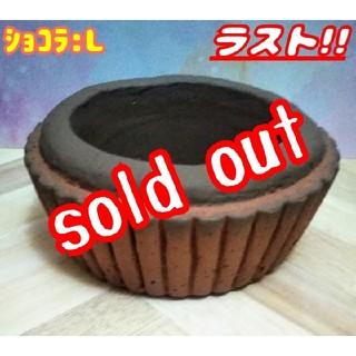 完売【再販:数量限定!!】タルト鉢♪ ショコラ:Lサイズ⑥ 多肉植物 寄せ植え (プランター)