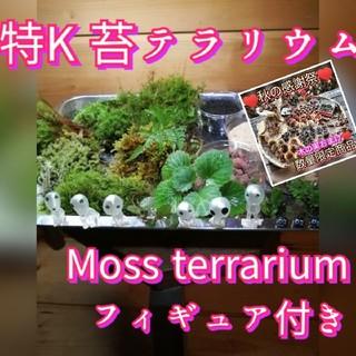 おまけ付き(^_^) 特K♥苔・フィギュアてんこ盛り特Kセット(その他)
