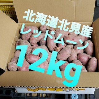 北海道北見産 新じゃがいも レッドムーン 12kg ◎農家直送(野菜)
