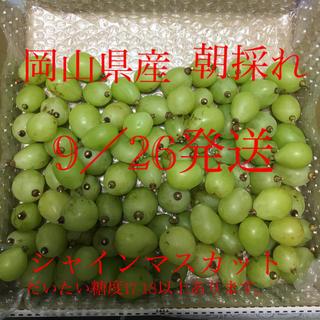 岡山県産 シャインマスカット  1kg  家庭用(フルーツ)