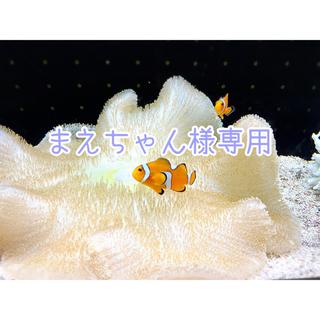 ヨースケ(YOSUKE)のYOSUKE 厚底スニーカー(スニーカー)