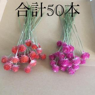 千日紅 センニチコウ ピンク オレンジ 花材 スワッグ  ガーランド リース(ドライフラワー)
