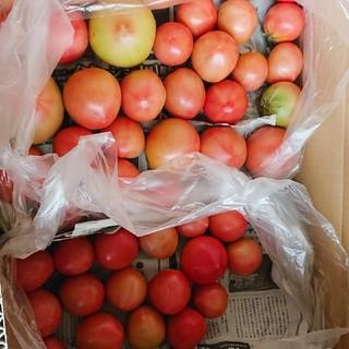 Yuzuki様 専用ページ 規格外トマト 10㎏と24個(野菜)