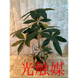 光触媒 人工観葉植物 抗菌消臭 ウォールグリーン パキラアレンジ5037