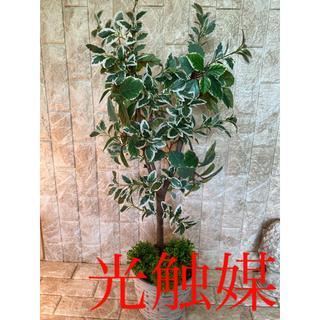光触媒 人工観葉植物 抗菌消臭 ウォールグリーン フィカス8638