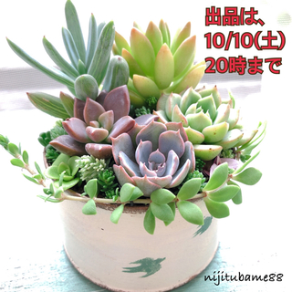 多肉植物 *そのまま飾れる 寄せ植え*vol.8(その他)