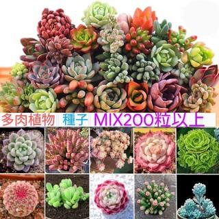 多肉植物 種子 MIX200粒以上❣
