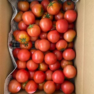麗月小ぶり5キロ 一(野菜)