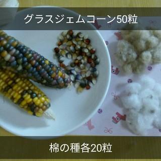 無農薬栽培 グラスジェムコーン種50粒 棉の種白ベージュ各20粒(その他)