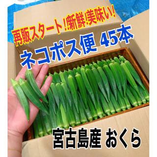 【45本】宮古島産 おくら オクラ