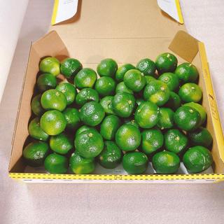 シークワサー1.1キロ 沖縄県産 無農薬(フルーツ)