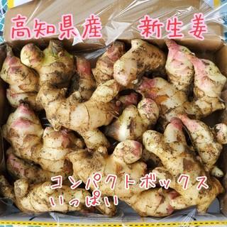 高知県産 土付き新生姜コンパクト①(野菜)