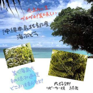 朝摘み直送!美ら海育ち!沖縄産人気の海ぶどう 茎付たっぷり1kg(野菜)