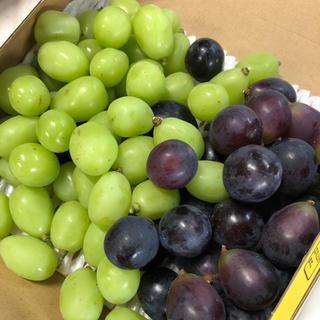 長野パープル、シャインマスカット約1キロ粒(フルーツ)