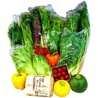 産地直送新鮮野菜と名古屋コーチンたまごの詰め合わせ 2~3名様分 10/1出荷分