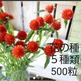 花の種 5品種 500粒セット(その他)