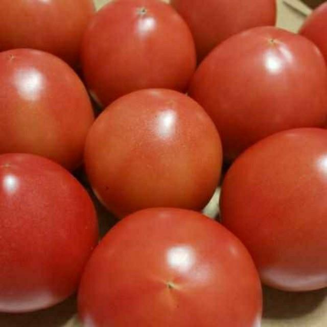 麗月トマト  食品/飲料/酒の食品(野菜)の商品写真