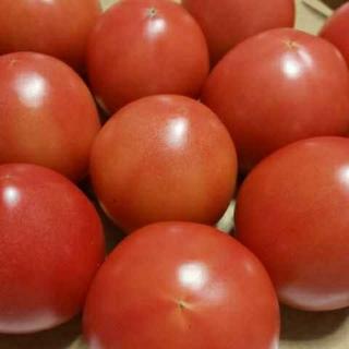 麗月トマト 問い合わせ専用
