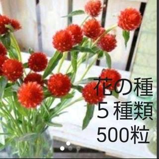 お花の種 5品種 500粒セット(その他)