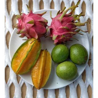 旬のフルーツセット♪ 沖縄産 スターフルーツ、ドラゴンフルーツ、グァバ(フルーツ)