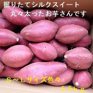新芋シルクスイート掘りたて丸形5.5kgL~Sサイズ千葉県産さつまいも農家直送