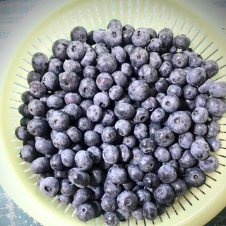 購入前コメントお願い致します🌸様 専用 群馬県産ブルーベリー 冷凍5キロ(フルーツ)