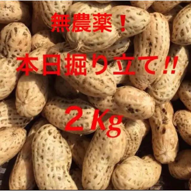 明日収穫!無農薬 生落花生 おおまさり 2Kg 食品/飲料/酒の食品(野菜)の商品写真