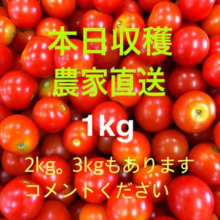 ミニトマト1キロ(野菜)
