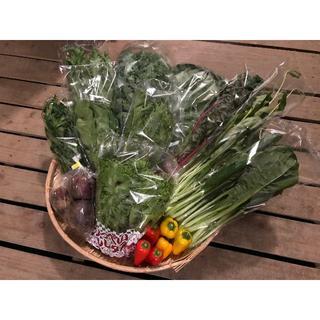 ご夫婦二人で食べきり量のサラダボウルが作れる詰め合わせキット【少量サイズ8品目】(野菜)